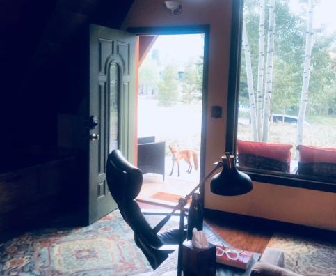 Breck fox